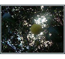 Sour hanging Photographic Print