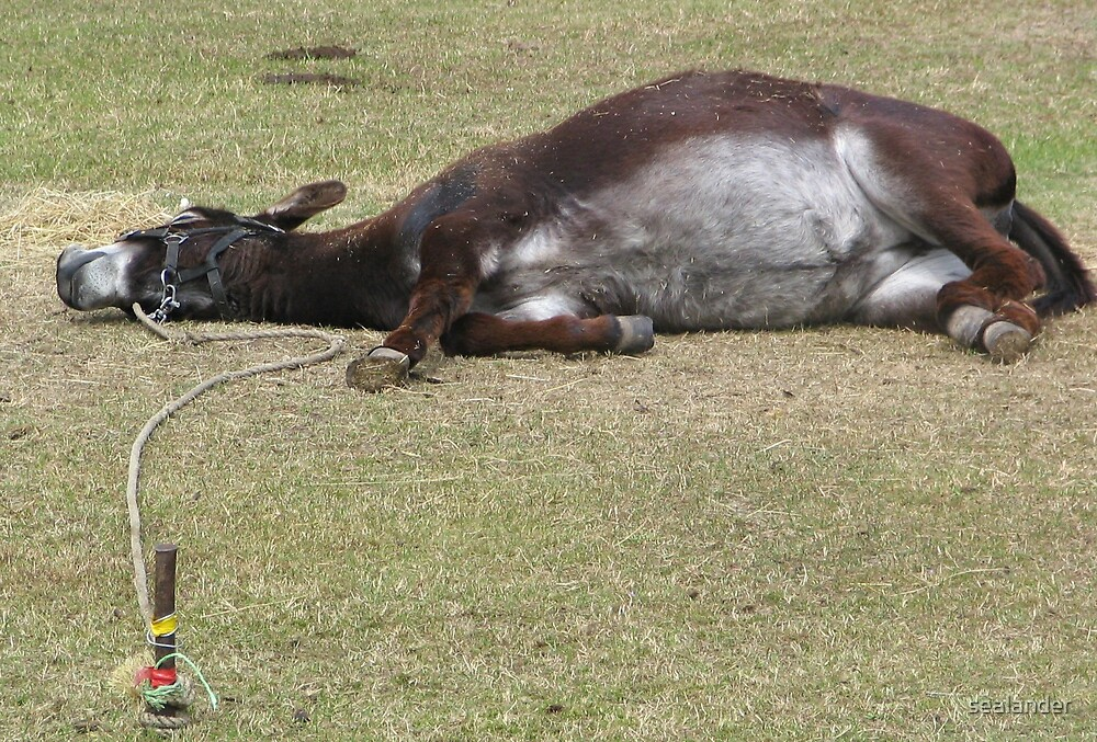 Donkey by sealander