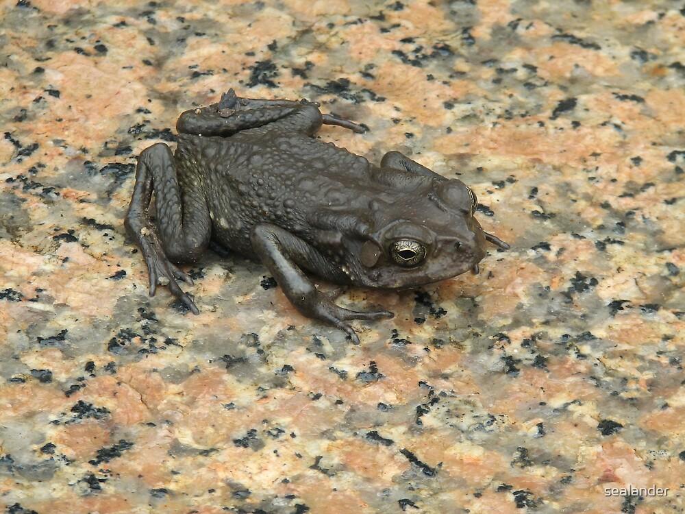 Frog by sealander