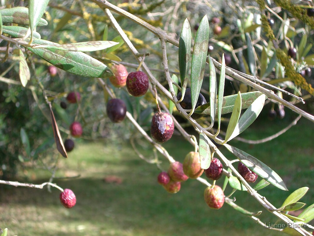 Olive Garden by Lianne Bissell