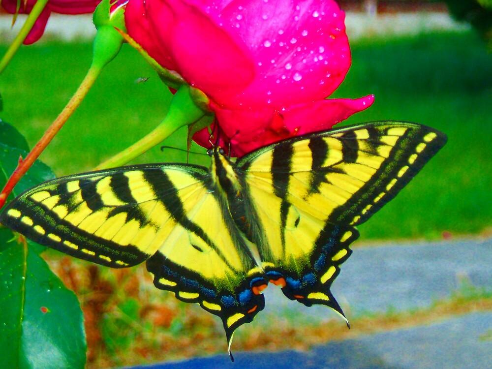 butterfly by monkey8149