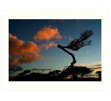 Wind Swept, Torquay,Start of the Great Ocean Road Art Print