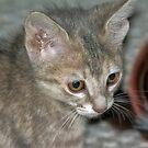 Meeka as a Kitten by TJ Baccari Photography