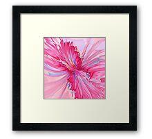 Carnation Pink Framed Print