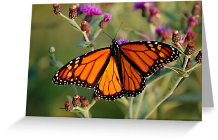 Monarch by Gregg Williams