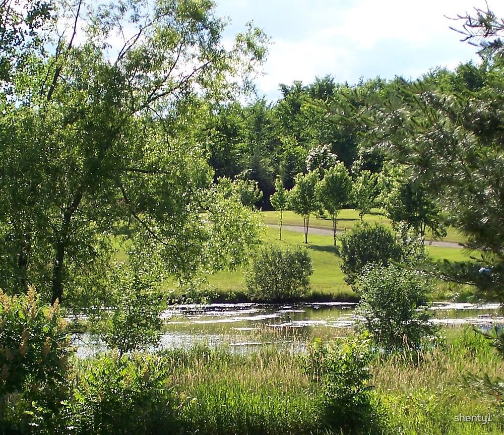 The Pond by shenty1