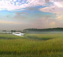 Pigeon Island Summer Marsh by Charlie