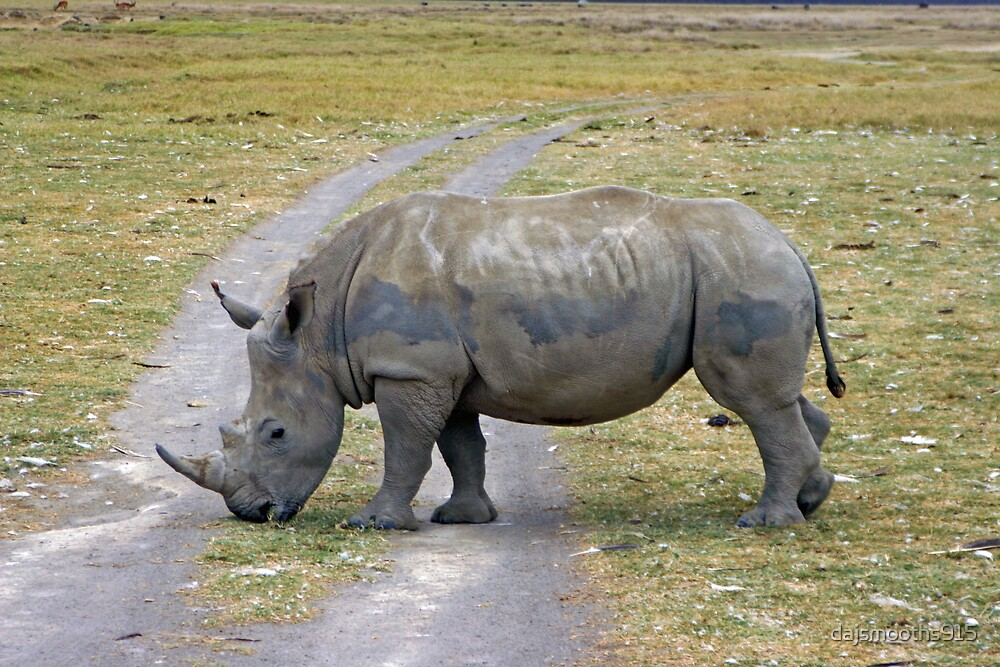 safari by dajsmooths915