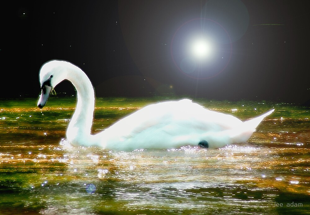 Dream swan by lee  adam