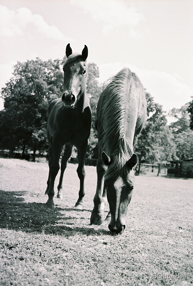 Two Horses by BCrittenden