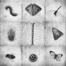 I is for Insects by Kara  Rasmanis