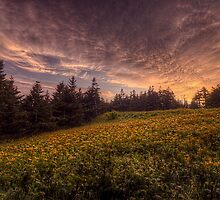 Late Spring on the Roan High Knob by James Hoffman