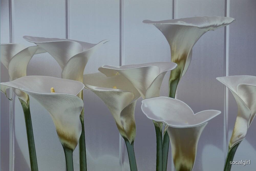 Exotic calla lillies by socalgirl