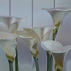 Exotic calla lillies by socalgirl