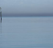 Bird on pylon on a calm day by fishknox