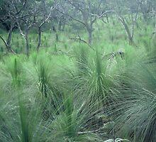 Grass tree paddock by fishknox