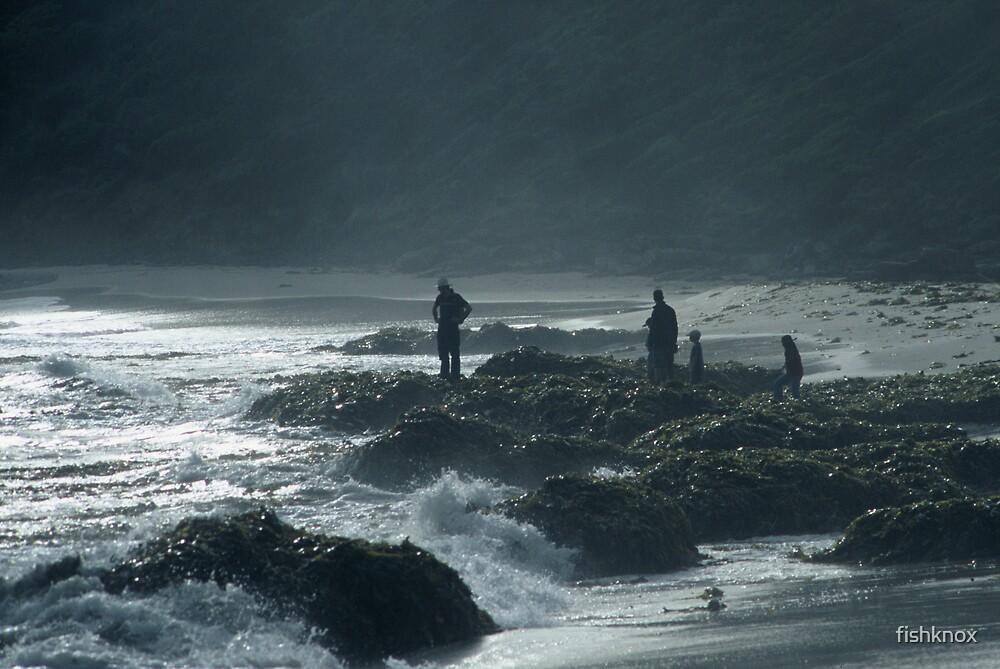 standing on kelp by fishknox