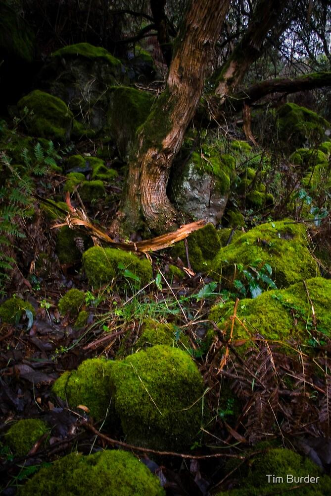 Mossy Rock 3 by Tim Burder