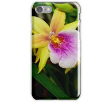 Gorgeous Miltonia Sunset Orchid iPhone Case/Skin