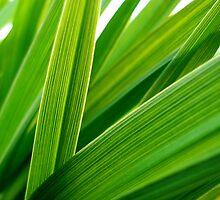 Lost Leaf  by Patrick  Maisonneuve