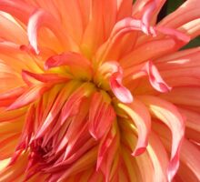 Peach-colored Dahlia Sticker