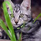 Lounging Tiger, crouching Sandra by Sandra Chung