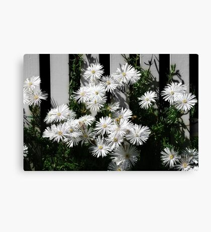 fence sitting Canvas Print