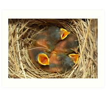 Baby blue birds Art Print