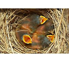 Baby blue birds Photographic Print