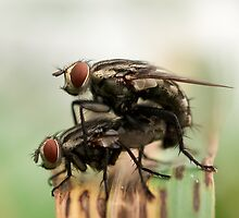 mating season by Shawn low