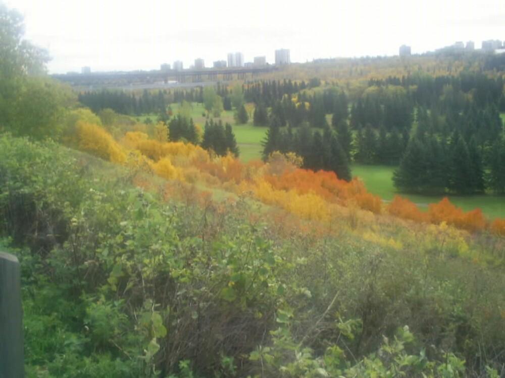 colored bushes on hillside by oilersfan11