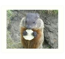 cutey groundhog Art Print
