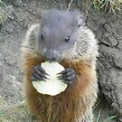 cutey groundhog by oilersfan11