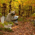 bear do  do in the woods by oilersfan11