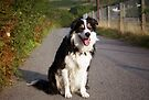 Laddie on the road by Michael Haslam