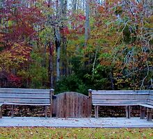 Bench Around The Pond by Cynthia48