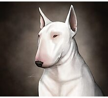 Bull Terrier Photographic Print
