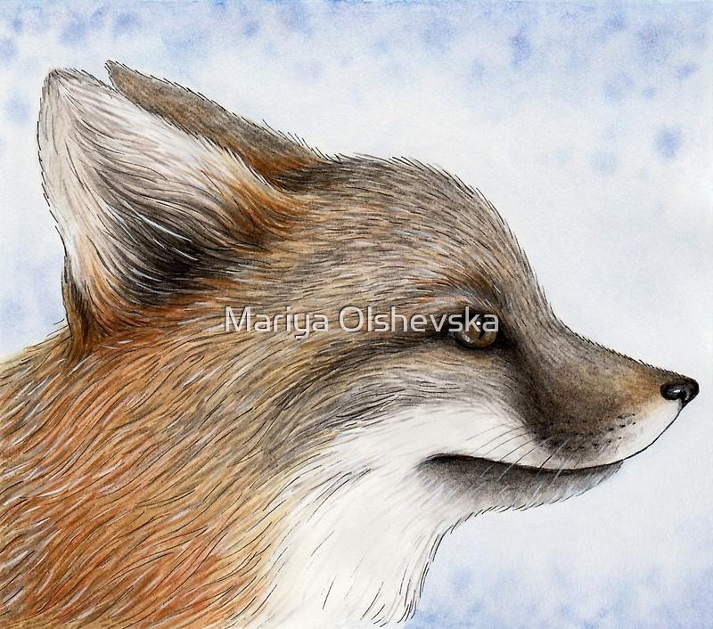 Grey Fox by Mariya Olshevska