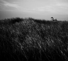 Race Point, Cape Cod, Massachusetts by robbucophotography