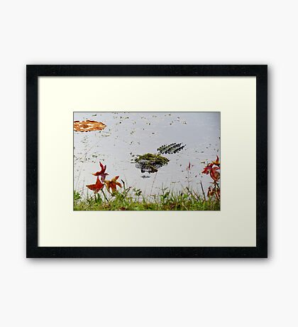 """Big Gator"" Framed Print"