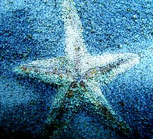 Crystal Starfish by Linda  Tenenbaum