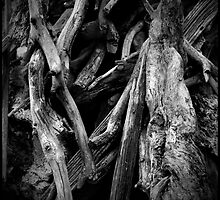 *Driftwood* by JessMack