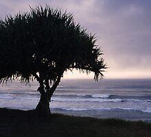 Corindi Tree by daveoh
