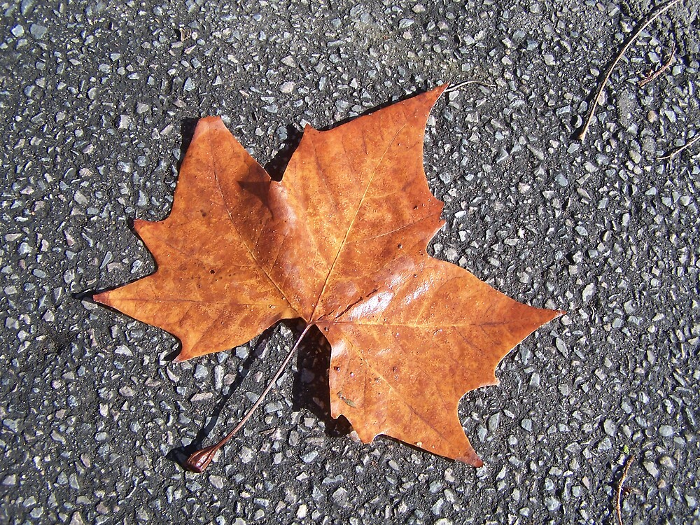 leaf all alone by Princessbren2006