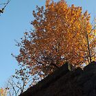 Autumn Colors and Foliage, Harsimus Branch Embankment, Jersey City, New Jersey  by lenspiro