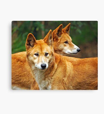 Dingoes Canvas Print