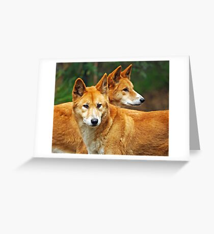 Dingoes Greeting Card
