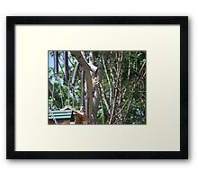 smart squirrel Framed Print