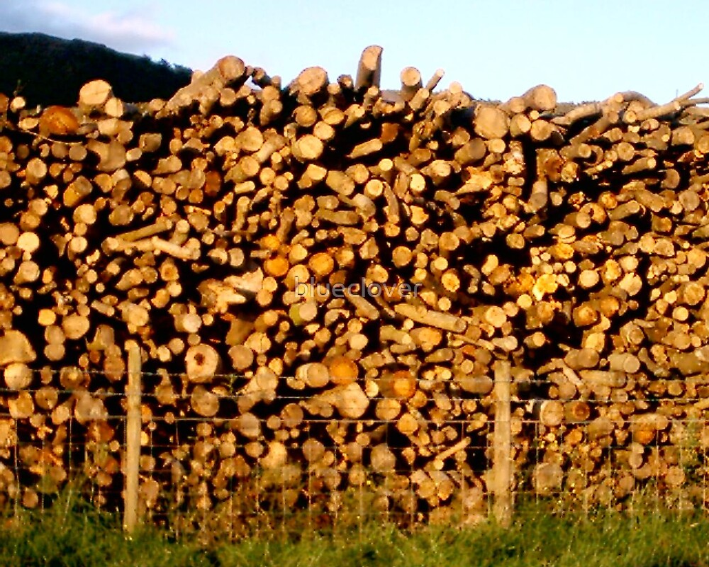 Logs in the Sunset light by blueclover