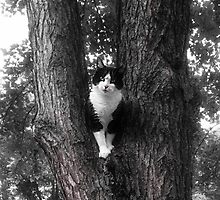 Black and White Rescue  Cat Posing in Tree by Peggy  Volunteer Photographer FOR RESCUE ANIMALS